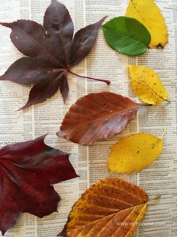 pressing-leaves